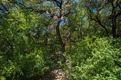 Forest - O. P. Schnabel Park - San Antonio - Texas - 23 April 2017