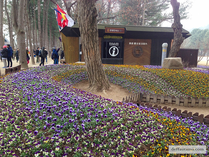 Nami Island - Beautiful Flowers