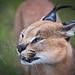 Namibia Naankuse Wildlife Sanctuary