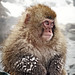 Snow Monkey Park Japan 2018, snow monkey portrait 2 WM