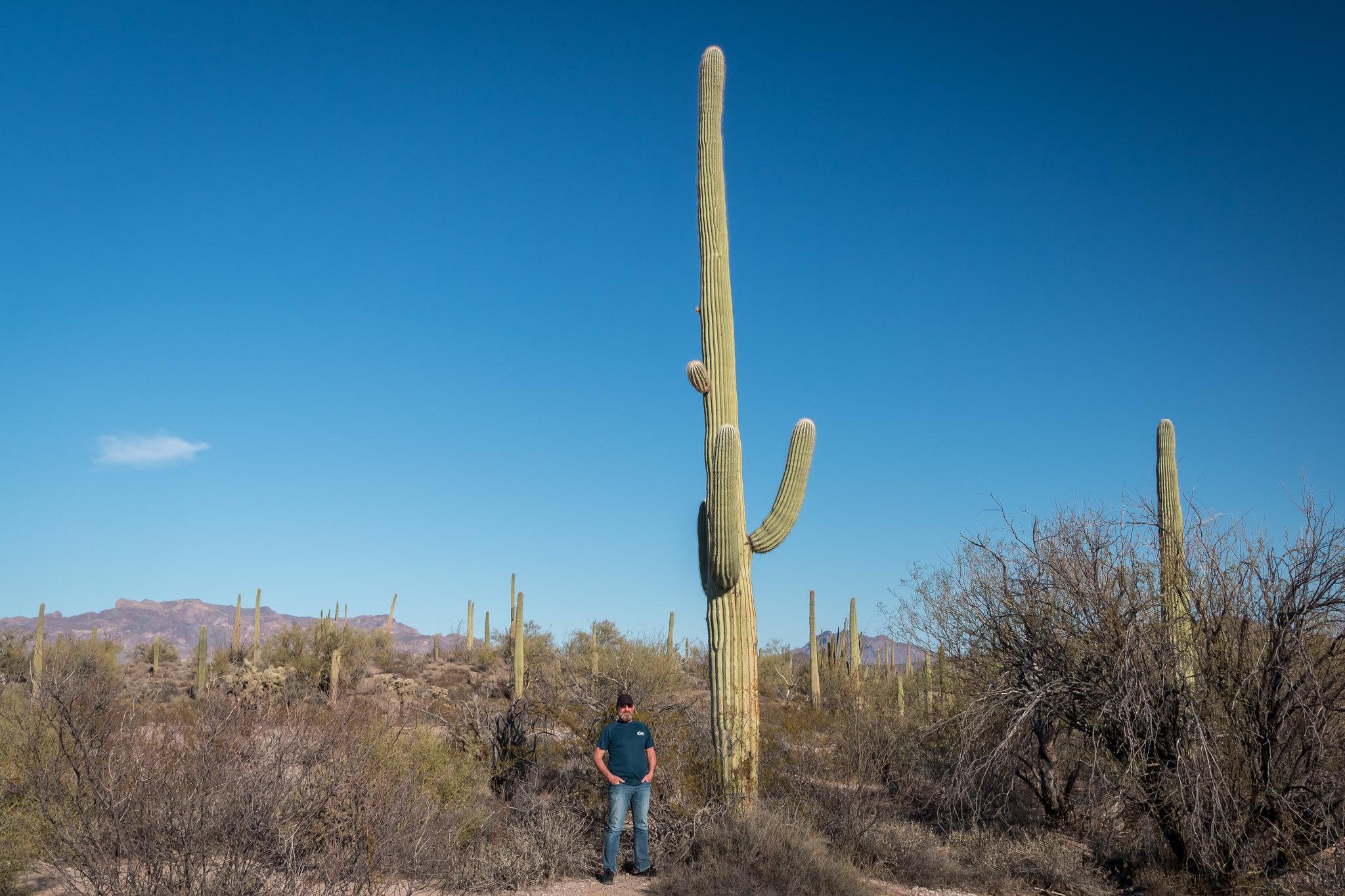 Organ Pipe Cactus NM - Arizona - [USA]