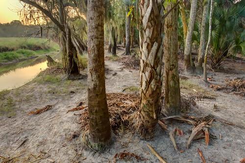 hdr florida myakkariverstatepark highbank lowbank sabalpalmetto fronds sunrise