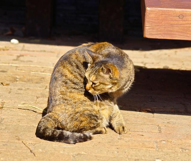公園の野良 a stray cat, Sony SLT-A77V, Sony DT 55-300mm F4.5-5.6 SAM (SAL55300)