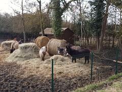 Une pause pour les ânes ! - Photo of Le Plessis-Placy