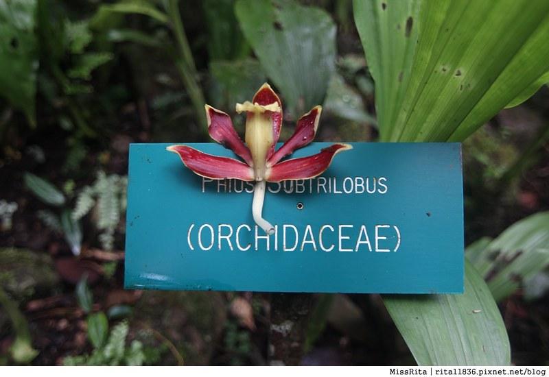 馬來西亞自由行 馬來西亞 沙巴 沙巴自由行 沙巴神山 神山公園 KinabaluPark Nabalu PORINGHOTSPRINGS 亞庇 波令溫泉 klook 客路 客路沙巴 客路自由行 客路沙巴行程31