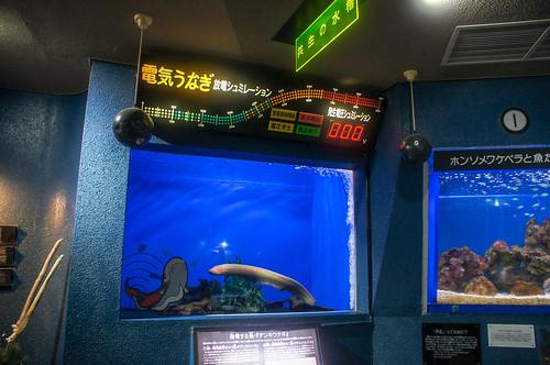 寺泊水族博物館2017