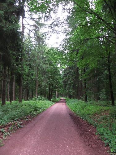 20170605 07 210 Regia Wald Weg