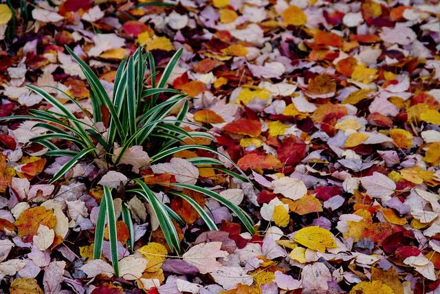 My Yard-Nov-7519-EDIT2