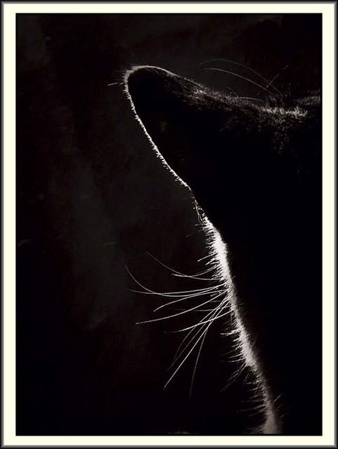 In my lap, again, a cat, named Debbie