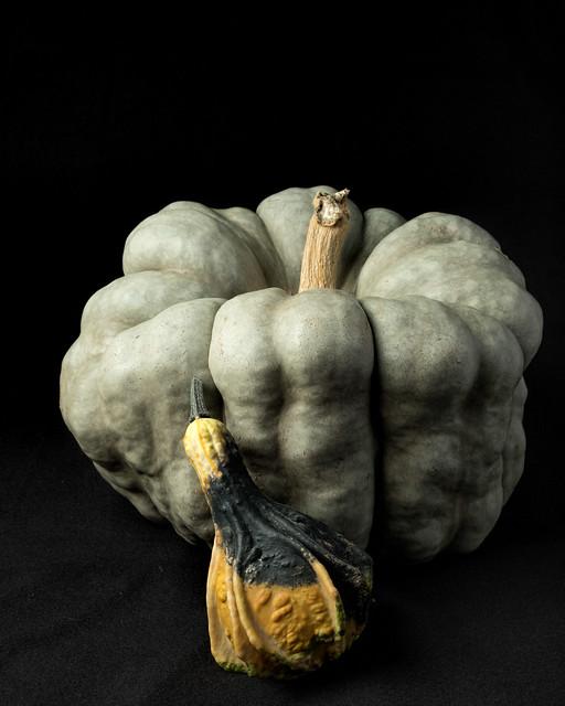 Green Pumpkin 'Shamrock'--9745