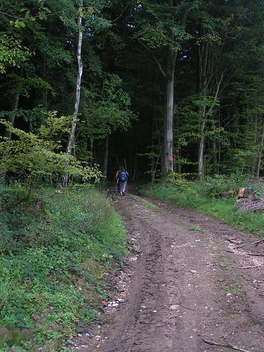 20070830 11578 0706 Jakobus Wald Weg ElisabethB Margarete Pilger