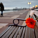 Flower on a bench