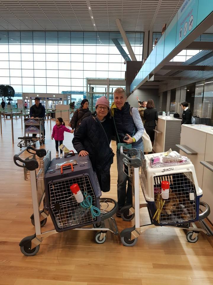 Sharon Ferguson flying with rescued dogs as flight volunteer.  With Nami Kim at the Incheon International Airport in South Korea.