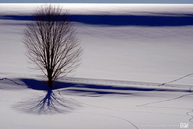 木立の影と足跡