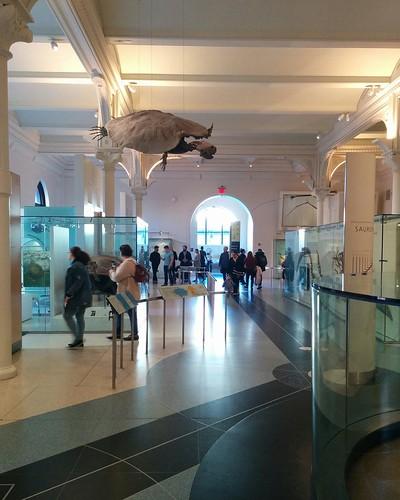 Ancient reptiles (3) #newyorkcity #newyork #manhattan #amnh #fossil #reptiles #americanmuseumofnaturalhistory #latergram