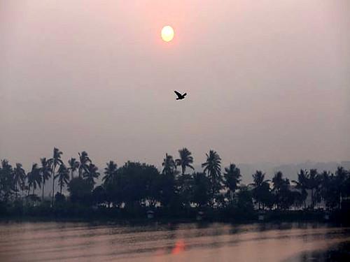 सुबह के वक्त ईस्ट कोलकाता वेटलैंड्स के ऊपर से गुजरता पक्षी
