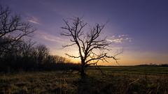Pea Ridge Dead Tree