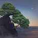 Prostrate Nepal Juniper II by jane-long