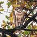Barn Owl Resting by Feiertagraphy