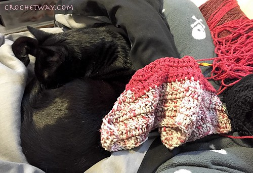 20180127-Cat & Crochet