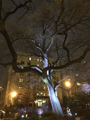 Tree lit at night, triangle park, M and 21st streets NW, Washington, D.C.