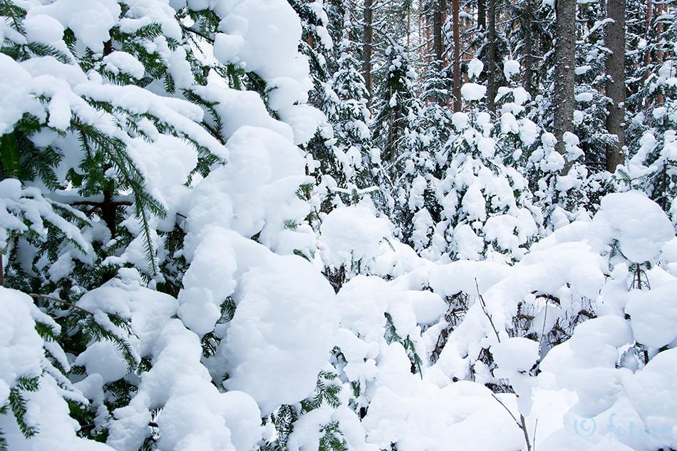 Snowy, snowy, forest, Lahemaa, National, Park, Estonia, Kaido Rummel