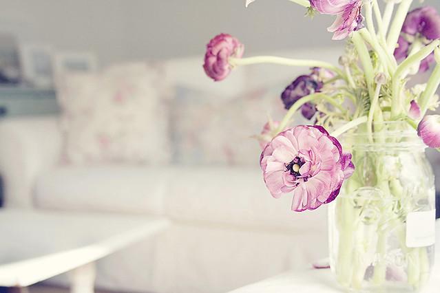 Ranunculus at home