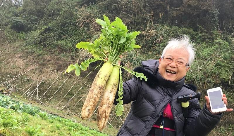 福山農場 高麗菜 (19)