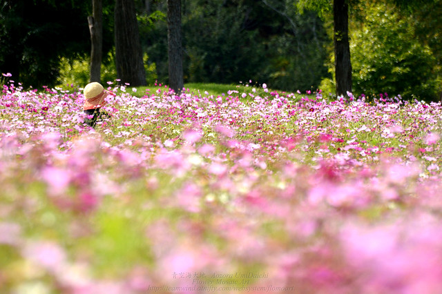 Photo:field of dreams By Aozora UmiDaichi (青空海大地)
