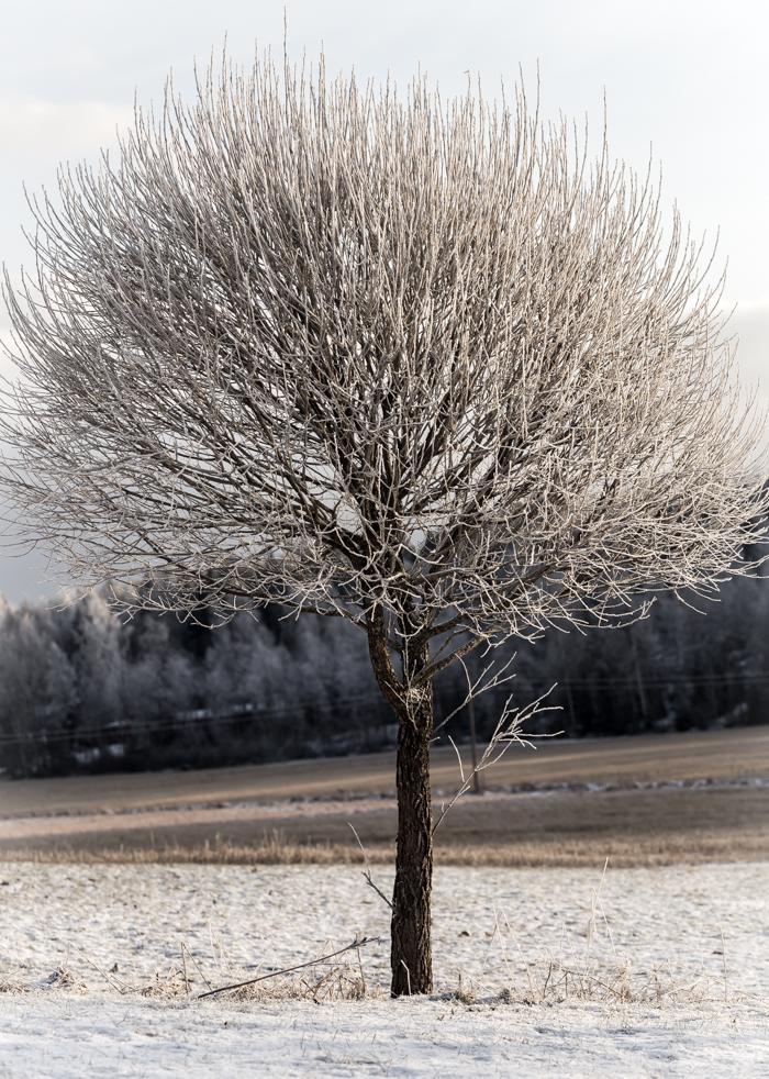 terijoen salava talvella
