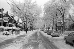 Boustead Avenue, Toronto, 1982