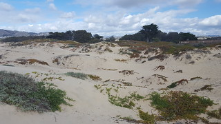 Dunes at Grover Beach