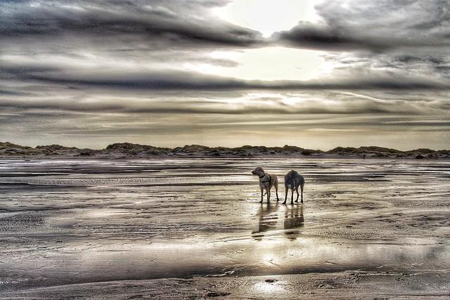 Irish Restricted Dog Breeds