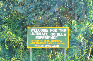 Gorilla trekking in Uganda - arriving at the Gorilla trekking park headquarters