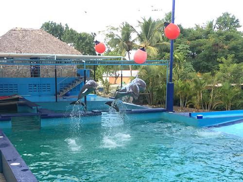 92 - Manati Park - Delphine / Dolphins 2
