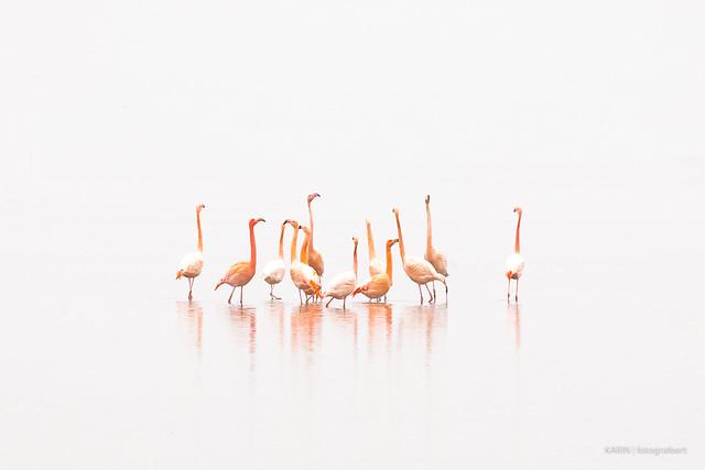 Flamingo's in the mist!