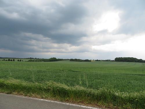 20170530 03 663 Regia Straße Feld Bäume