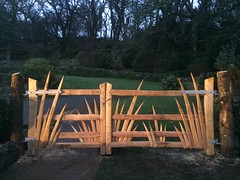 spikey cleft chestnut gates
