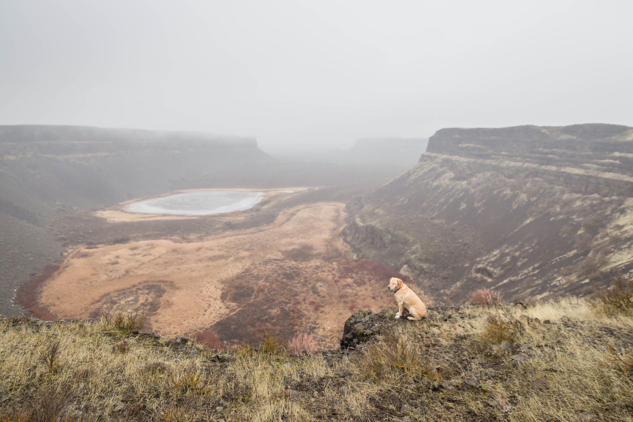 Summit dogs in Monument Coulee