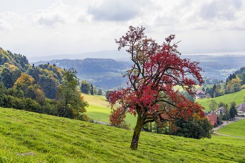 Bachtel landscape I