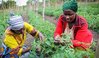 Tuamini farmers, Tanzania