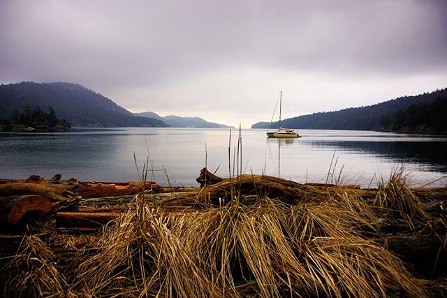 Good Morning from Medicine Beach! Pender Island, BC, Canadaland. ️