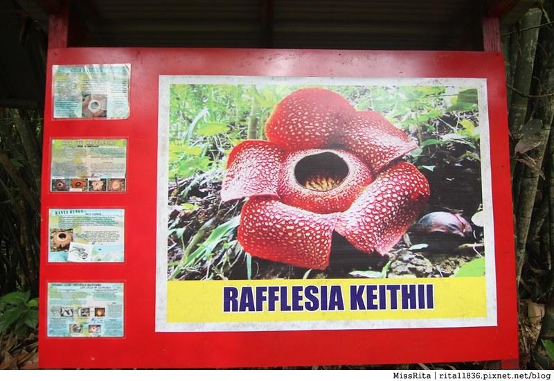 馬來西亞自由行 馬來西亞 沙巴 沙巴自由行 沙巴神山 神山公園 KinabaluPark Nabalu PORINGHOTSPRINGS 亞庇 波令溫泉 klook 客路 客路沙巴 客路自由行 客路沙巴行程38