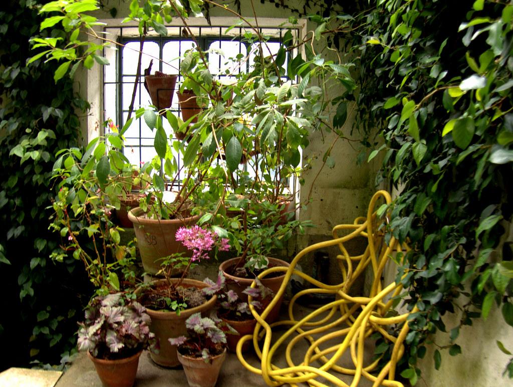 la manguera amarilla en un rincón del jardín