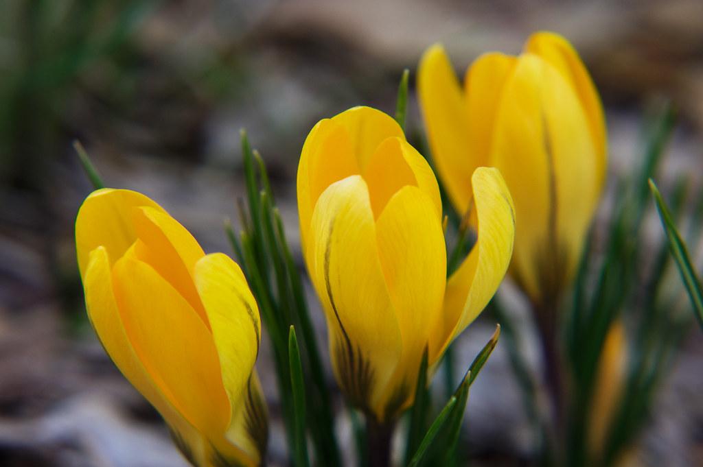 Spring begins in February