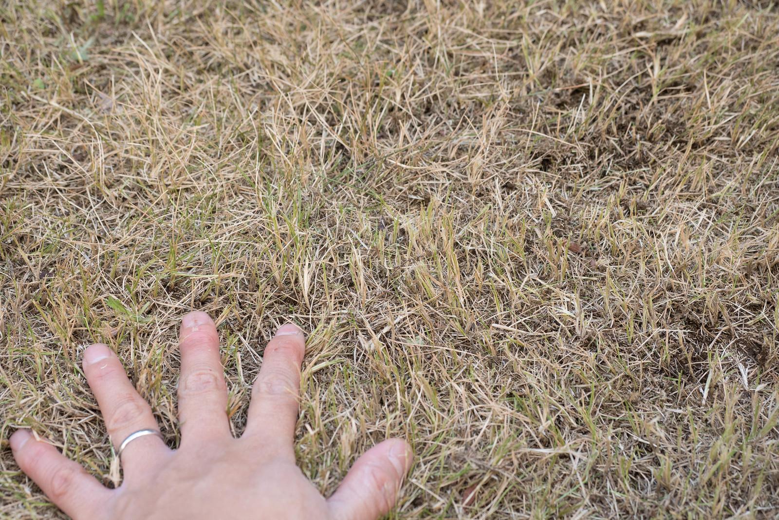 家庭用電動草刈機-26