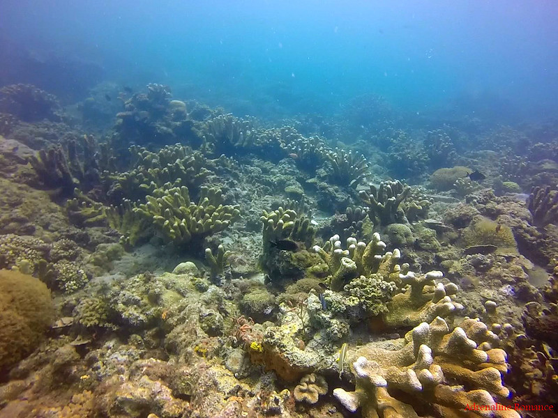 Damaged Corals