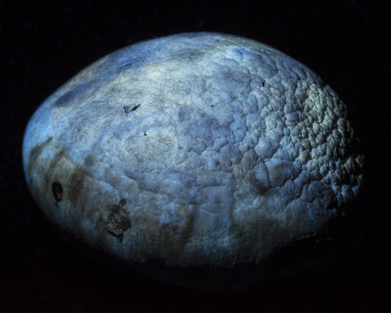 UV Mushroom
