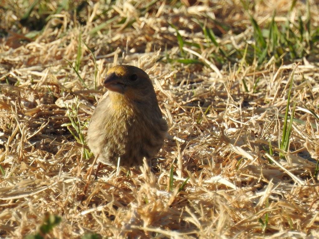 Tucson birds