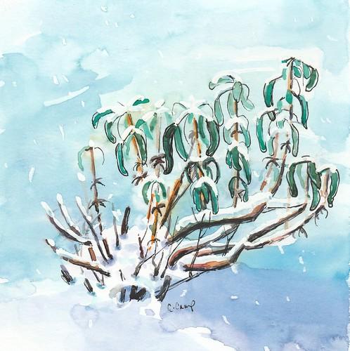 20180115_snow_on_sage